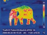 thermografie veterinaerthermografie elefant